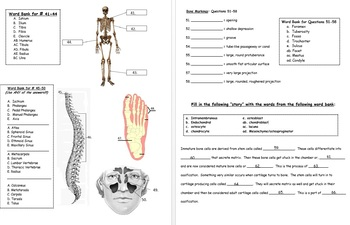 Anatomy Quiz-Test-Power Point Bundle (for Specific Body Systems)