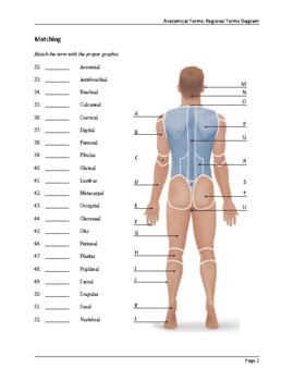 Anatomy Regional Terms Worksheet by The Chaotic Teacher | TpT