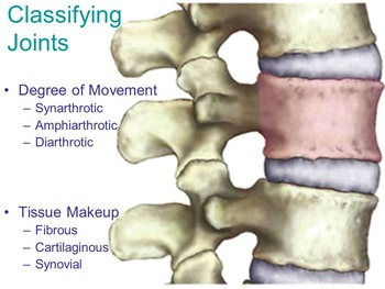 Anatomy Resources- Joints