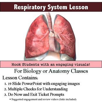 Anatomy - Respiratory System