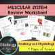 Anatomy Review Worksheets Bundle *ENTIRE YEAR*
