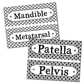 83 Anatomy Science Vocabulary Word Wall Terms with EDITABLE Cards