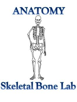 Skeletal System Bone Lab Anatomy and Physiology