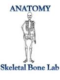 Skeletal System ~ Bone Lab