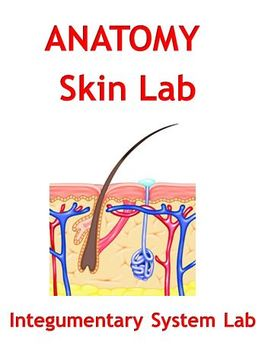 Skin Lab - Integumentary System Lab