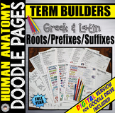 ANATOMY Root/Prefix/Suffix DOODLE PAGES ~Year Long Bundle~