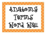 Anatomy Terms Word Wall