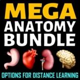 Anatomy Bundle   Editable, Printable & Distance Learning O