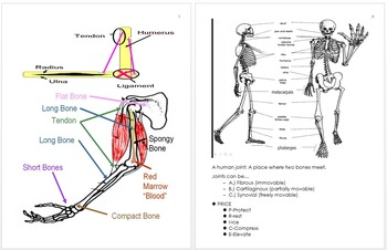 Anatomy Unit Notes, Human Body Unit Curriculum and Standar