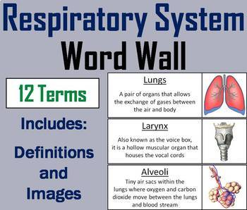 Anatomy Word Wall Bundle: The Human Body Systems