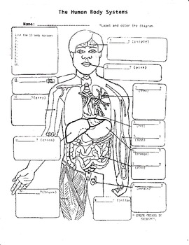 The Human Body Systems #1 by Biology Buff | Teachers Pay ...