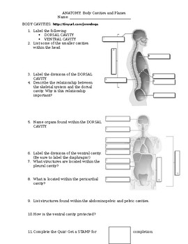 Anatomy Body Planes Worksheets & Teaching Resources | TpT