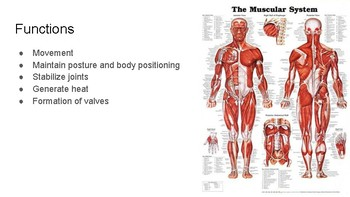 Anatomy and Physiology Unit 4 - Support and Movement