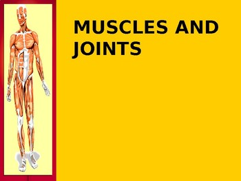 Anatomy and Physiology of Muscles and Joints