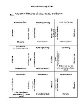 Anatomy of Head, Neck  9 Square