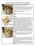 Anatomy of Human Head for Artists