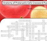 Anatomy of Prokaryotic Cells Crossword Puzzle