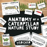 Anatomy of a Caterpillar Nature Study, Life Cycle of a But