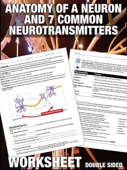 Parts of a Neuron and 7 Common Neurotransmitters Worksheet