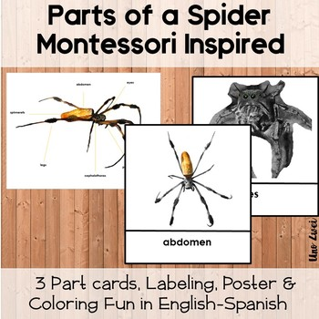 Anatomy of a Spider - Montessori Science Printable Pack Including 3 Part Cards
