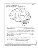 Anatomy of the Brain Class Activity Diagram Quiz Pictures