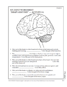 Brain Anatomy Coloring Worksheet Color Of Love Brain Anatomy ...