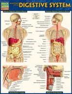 Anatomy of the Digestive System - QuickStudy Guide
