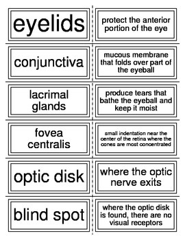 Anatomy of the Eye Flash Cards