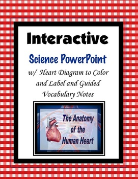 Anatomy of the Heart Vocabulary and Diagram PowerPoint