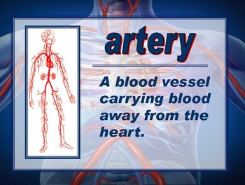 Anatomy of the Heart Vocabulary and Diagram PowerPoint by ...