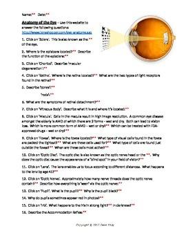 Anatomy of the Human Eye with KEY