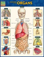 Anatomy of the Organs - QuickStudy Guide