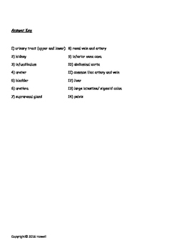 Anatomy of the Urinary System Quiz/Worksheet
