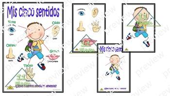 "Anchor Chart "" cinco sentidos"" (Spanish)"