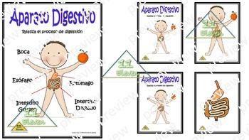 "Anchor Chart "" El Sistema Digestivo"" (Spanish)"