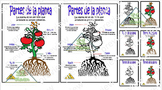 "Anchor Chart "" Partes de la planta"" (Spanish)"