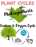 Anchor Chart: Plant Cycles
