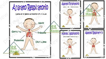 "Anchor Chart "" Sistema Respiratorio: (Spanish)"