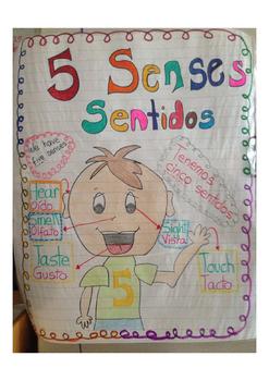 Dual Laanguage 5 senses. Spanish / English.