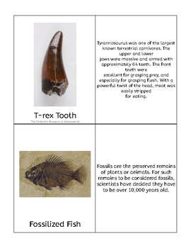 Ancient Fossils Definition Cards