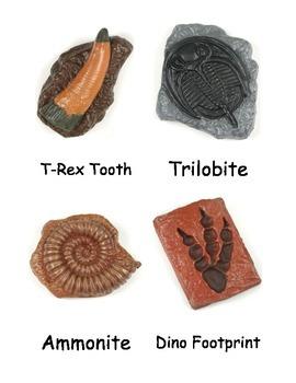 Ancient Fossils Nomenclature