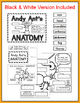 Insects Activity - Ant Anatomy File Folder Game