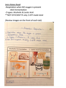 Anerobic Cellular Respiration Interactive Notebook notes page