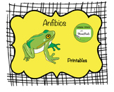 Montessori Anfibios la rana (the frog)