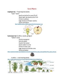 Angiosperm and Gymnosperm Seed Plants Study Notes