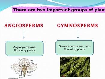 Angiosperms and Gymnosperms
