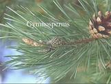 Angiosperms and Gymnosperms PowerPoint