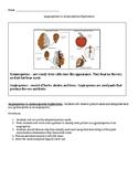 Angiosperms vs. Gymnosperms Exploration