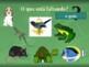 Animais (Animals in Portuguese) PowerPoint
