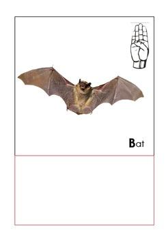 Animal ABC Line - Bat